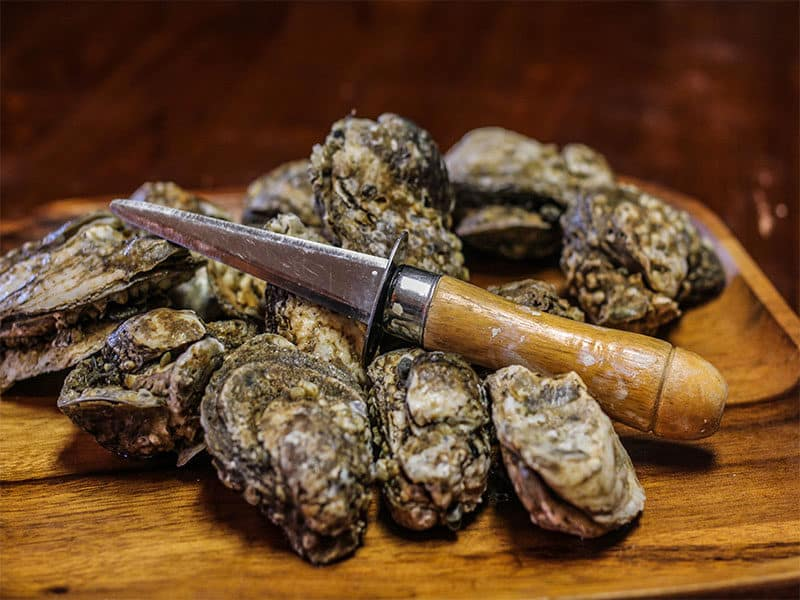 Oyster Shucking Knives
