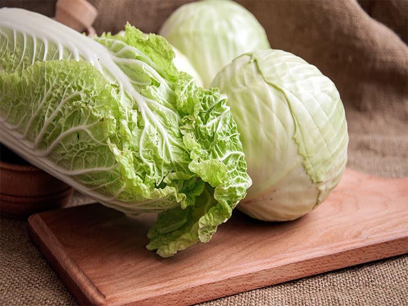 Fresh Green Garden Cabbage