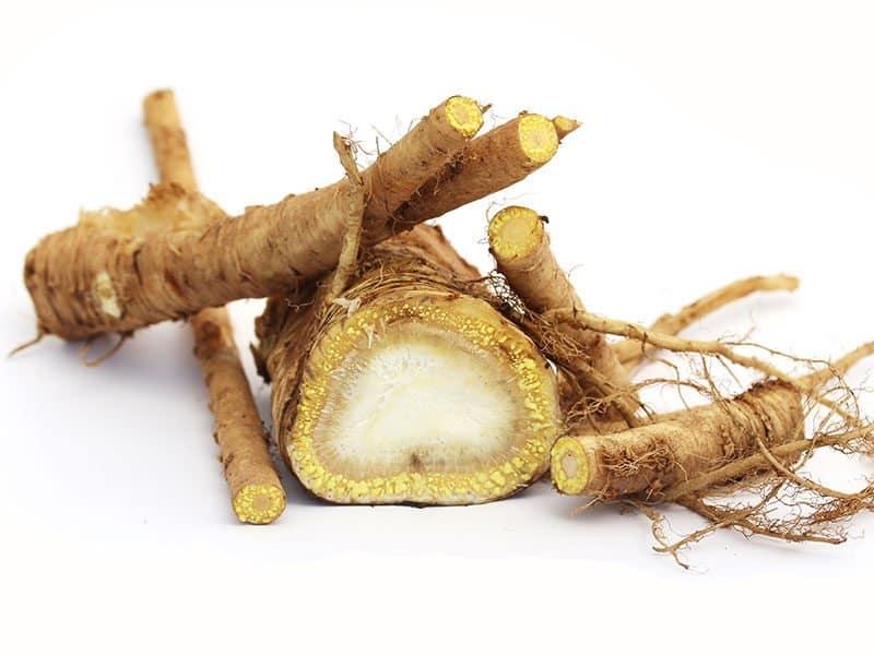 Root Garden Angelica