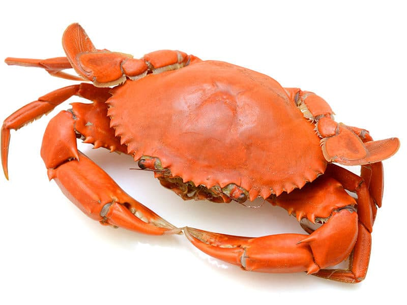 Steamed Crab on White