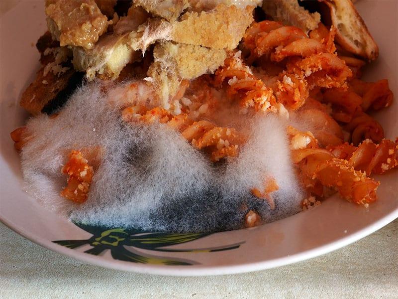 Mold On Plate Pasta Sauce