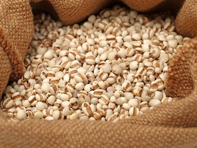 Adlai Is A Powerhouse Grain