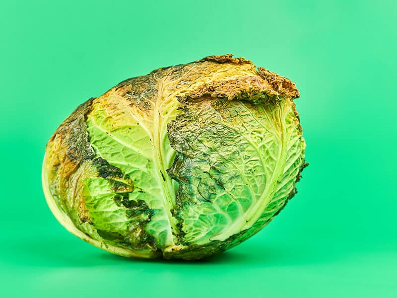 Cabbage Is Weird Color