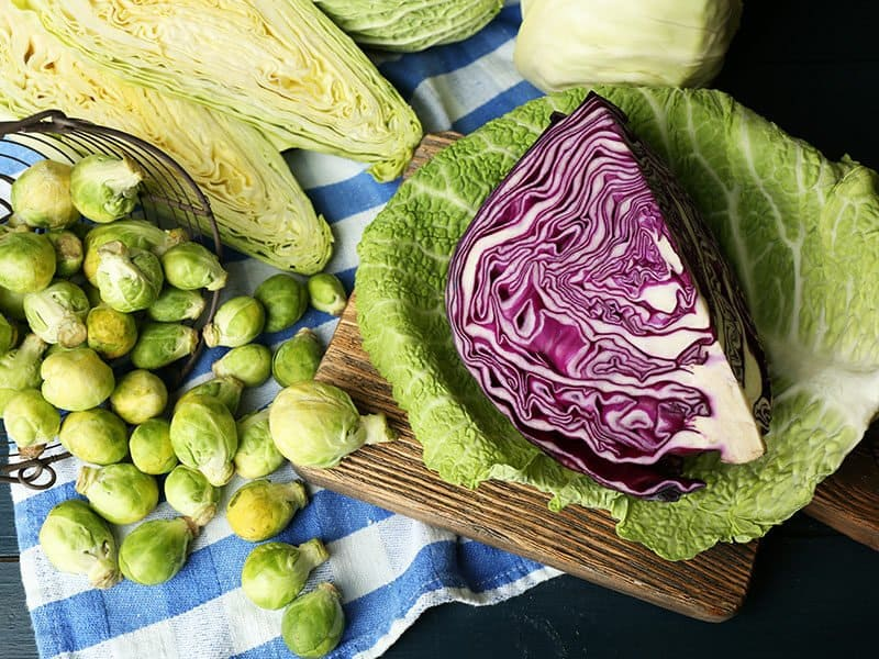 Cabbage Red Brussels