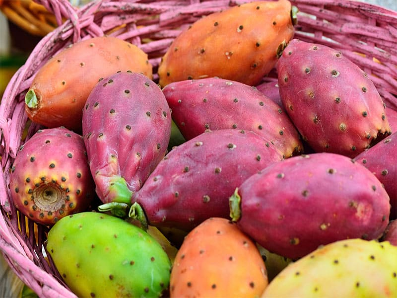 Colored Prickly Pear Basket