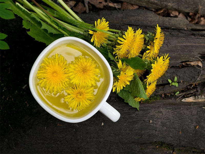 Dandelion Flower Tea Infusion White