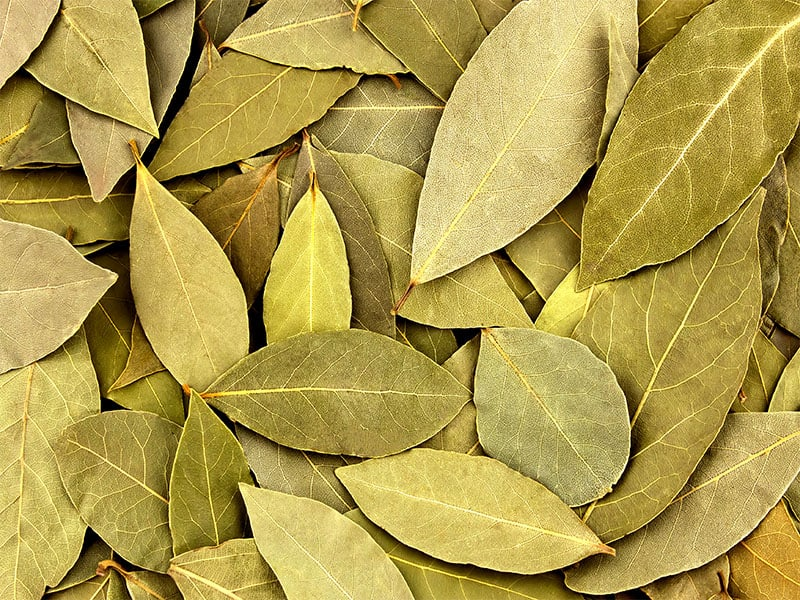 Dried Bay Leaves Texture