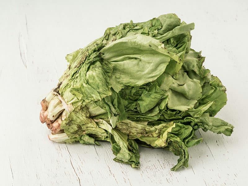 Lettuce Has Signs Rotten