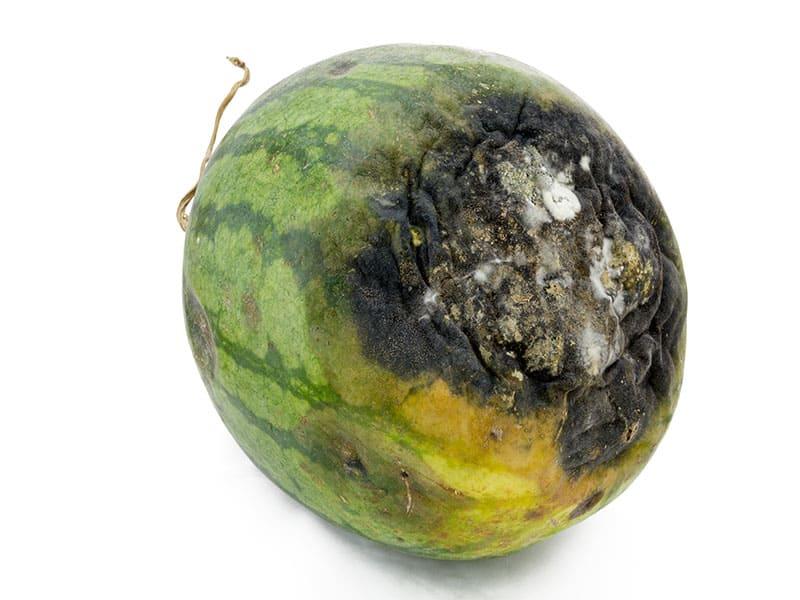 Rotten Watermelon With Dark
