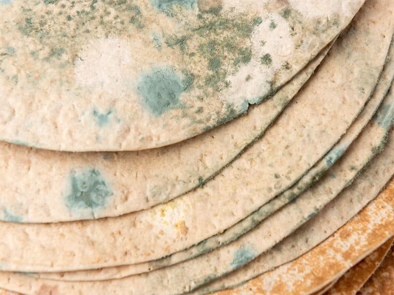 Tortilla Mold Isolated