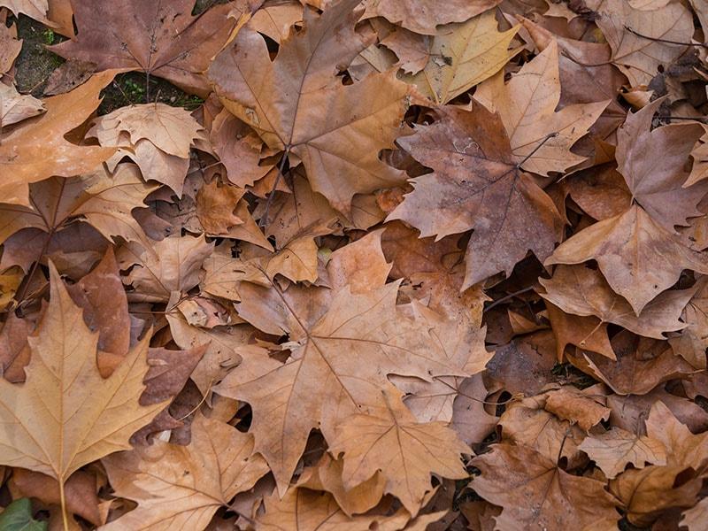 Dried Leaf Potpourri
