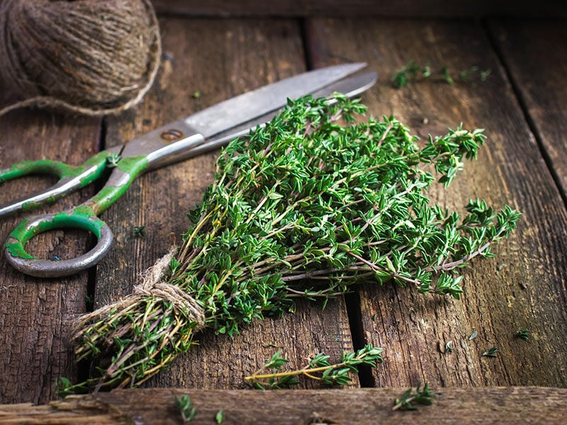 Bunch Thyme