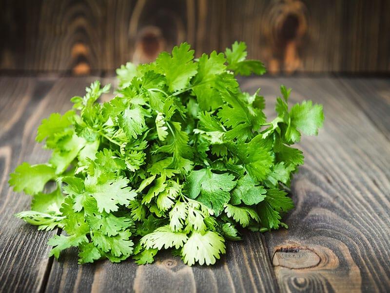 Fresh Green Cilantro Coriander