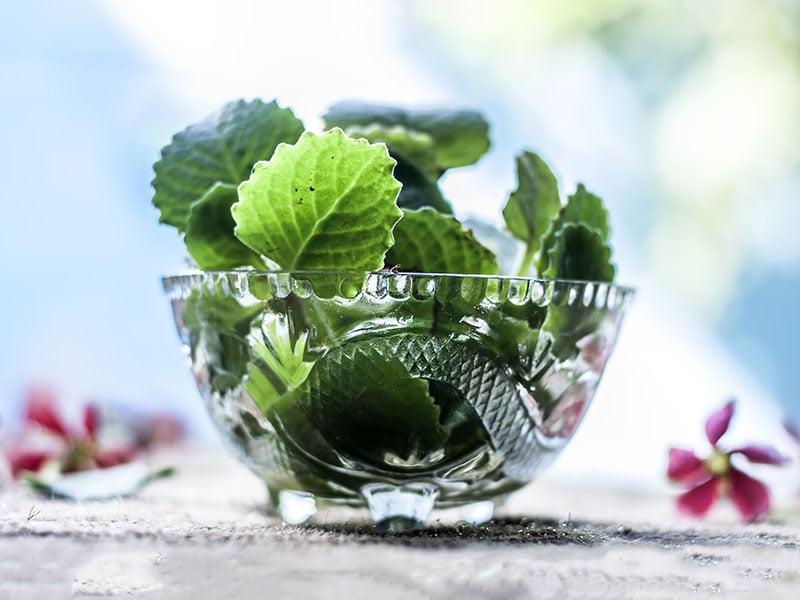 Fresh Green Ajwain Glass Bowl