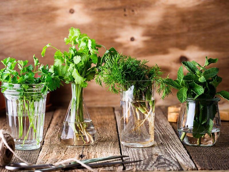 Fresh Homegrown Organic